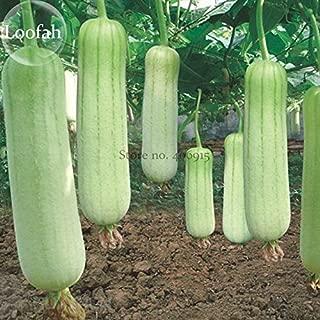 2018 Hot Sale!! Heirloom White Jade Luffa Organic Vegetables, 8 Seeds, Rare Snake Gourd Loofah E3821