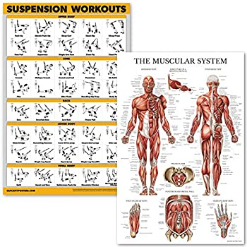 QuickFit Suspension Workouts and Muscular System Anatomy Poster Set - Laminated 2 Chart Set - Suspension Exercise Routine & Muscle Anatomy Diagram - 18  x 27
