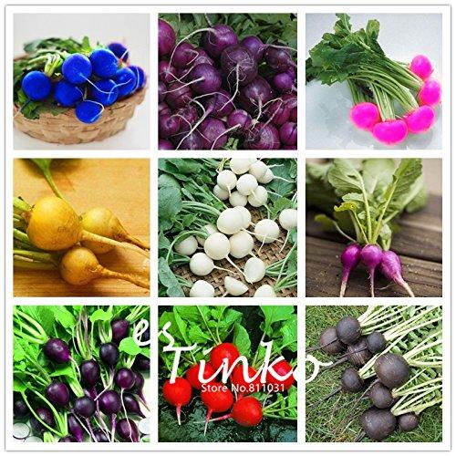 Rainbow Color Cherry Belle Radis Graines délicieux légumes Graines jardin Jardin des Plantes Semences potagères 200 Pcs