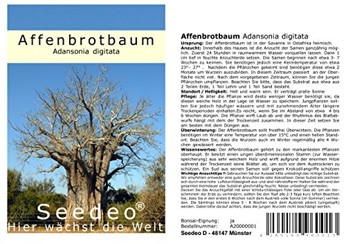 Seedeo® Affenbrotbaum (Adansonia digitata) 6 Samen