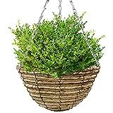Cestas colgantes con plantas naturales, macetas colgantes para interiores y exteriores,...