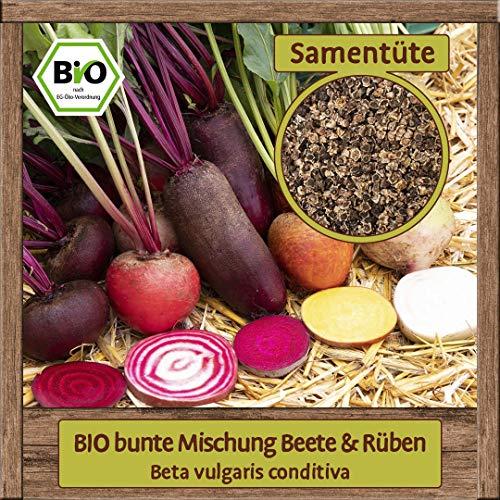 BIO Rüben & Beeten Samen Mischung Gemüsesamen bunte Rüben & rote Beete