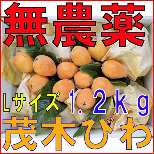 長崎産 無農薬 茂木びわ Lサイズ 1.2kg 25玉前後 びわの葉入り びわ ビワ 枇杷