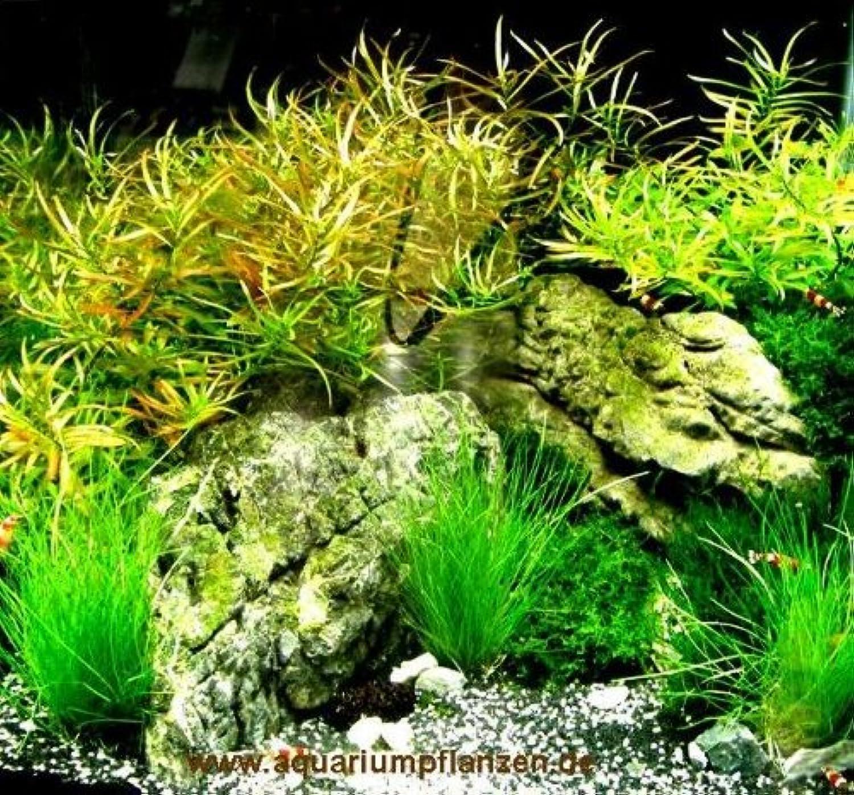 Nano VIII Set Aquarium Plants 3040 l gravel, decorative