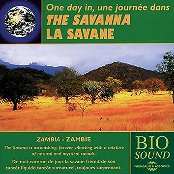 Zambia: The Savanna - La savane de Zambie