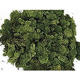 Eternaflor Liquen Preservado Premium. Paquete 250 gr. Color Verde. Musgo preservado envasado en España.
