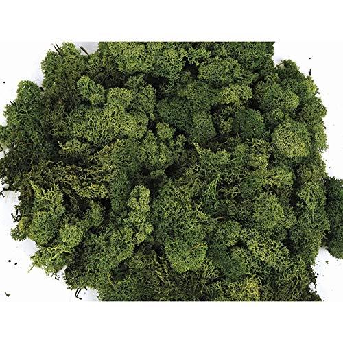 Lichene stabilizzato premium. Confezione da 250 gr. Colore verde. Muschio di renna stabilizzato. Confezionato in Spagna