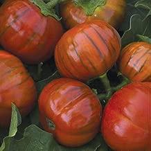 Burpee Turkish Orange Eggplant Seeds 30 seeds