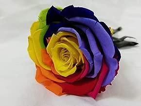 Almaflor Rosa eterna Arco Iris Gratis TU ENVÍO. Rosa preservada Arco Iris Cabeza 6 cm, Tarjeta dedicatoria y presentada en Tubo de conservación 25 cm. Rosa preservada Arcoiris.