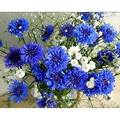 Ifoto Diy 5D Diamante Pintura Por Número Kit Rhinestone Bordado De Punto De Cruz Artes Manualidades Lienzo Pared Decoración(30X40Cm)-Gypsophila Flor Azul