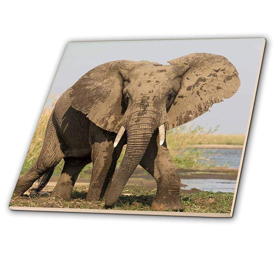 3dRose ct_256987_7 Africa, Zambia. Elephant Next to Zambezi River Glass Tile 8