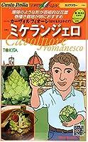 【種子】 Gusto Italia カリフラワー カーヴォルフィオーレ (ロマネスコタイプ) ミケランジェロ トキタ種苗のタネ