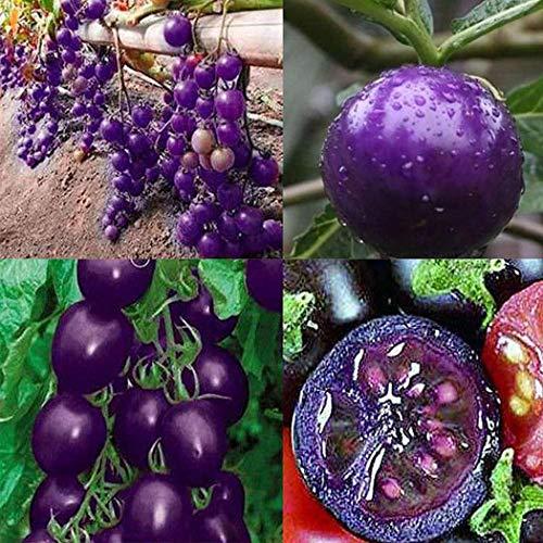 Cioler Jährliche gemäßigte purpurrote Tomatensamen-Garten-Bonsaisamen Blumensamen