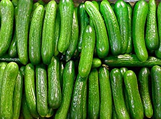 persian cucumber plants for sale