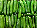 US Grown! 30+ Persian Beit Alpha (a.k.a. Lebanese) Cucumber Seeds Heirloom Non-GMO Burpless Sweet Non-Bitter and Acid Free, Crispy and Sweet, Fragrant and Delicious, Grown in USA!