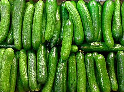 30+ Persian Beit Alpha (A.k.a. Lebanese) Cucumber Seeds Heirloom NON-GMO Crispy Fragrant From USA