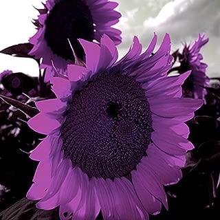 Best purple sunflower seeds Reviews