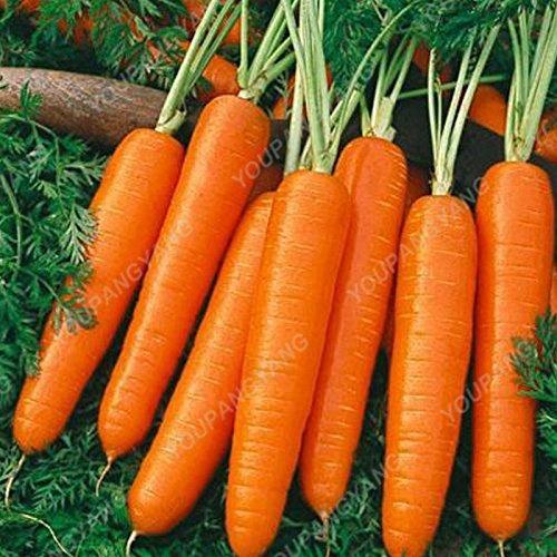 100pcs/sac carotte Semences Heirloom bio Graines Légumes Fruits très Graines ginseng long carotte Plante en pot pour jardin jaune