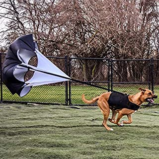 Dog Parachute for Speed Training