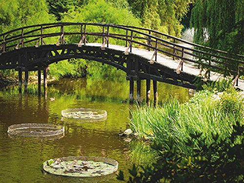 Artland Qualitätsbilder I Poster Kunstdruck Bilder 80 x 60 cm Landschaften Garten See Foto Grün C8UY Japanische Gartenbrücke in Wroclaw Polen