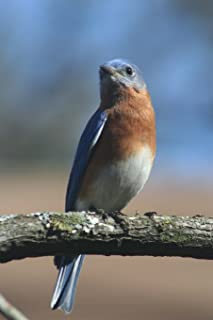New York State Bird - Eastern Bluebird Journal: 150 page lined notebook/diary