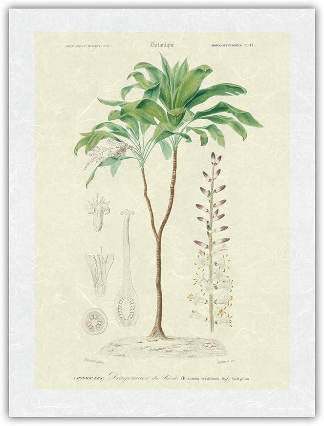 ☆正規品新品未使用品 Flowering Dracaena Corn Plant Illustration Botanical Vintage セール 登場から人気沸騰 -