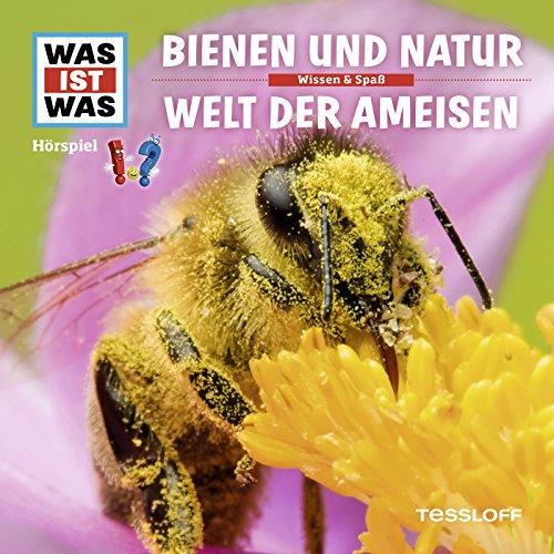 Ein Bienenvolk schwärmt aus
