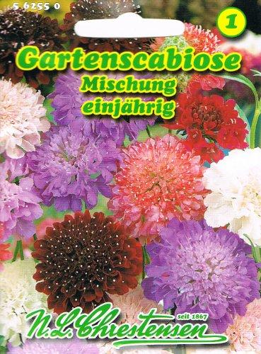 Gartenscabiose Mischung Scabiosa atropurpurea duftend