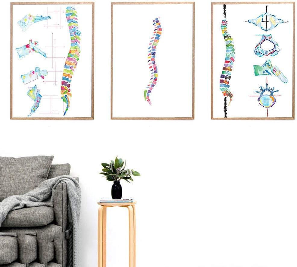 KDSMFA Póster médico de quiropráctico de impresión de columna vertebral colorido de anatomía para pared de regalo, fisioterapeuta, decoración de la habitación de fotos-40 x 60 cm x 3 piezas sin marco