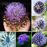 50pcs Echium vulgare Blau Sow Thistle Echium spp Blaue Distel Samen Blumensamen Bonsai Samen Indoor-Anlage für Hausgarten