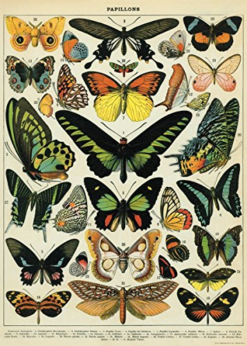 Cavallini Luxury Schmetterlinge Einwickelpapier / Poster