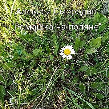 Ромашка на поляне