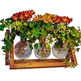 NEW, Bigger, 10x Stronger Plant Terrarium with Wooden Stand, Chain Link Support & More From U.S. Brand. Plant Propagation Stations/Hydroponic Vase/Large Glass Vase gift/Wooden Vase Holder Home/Garden