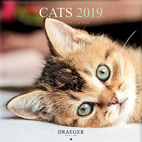Draeger 79003091 gran calendario de pared 29 x 29 cm gatos 2019 ...