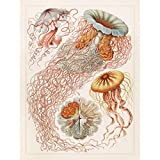 Meishe Art Poster Rosa Quallen Kunstdrucke Plakate Drucken