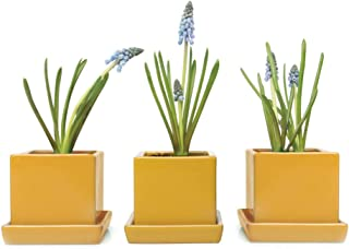 Best mustard plant pot Reviews