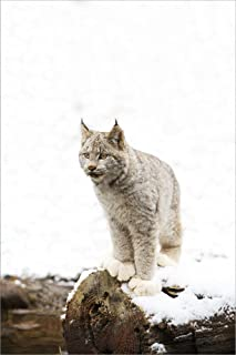 Best bobcat print snow Reviews