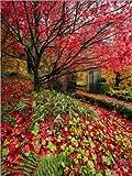 Posterlounge Lienzo 60 x 80 cm: Pembrokeshire Autumn Garden de Simon West -...