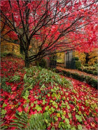 Posterlounge Lienzo 70 x 90 cm: Pembrokeshire Autumn Garden de Simon West...