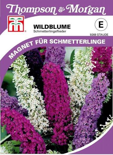 Wildblume Sommerflieder von Thompson & Morgan
