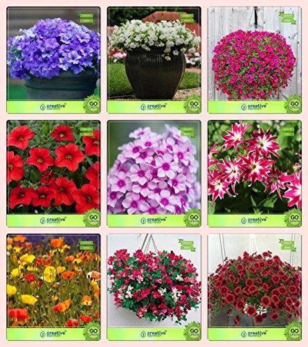 Pinkdose® Blumensamen: Pflanzensamen für neue Heim-Kombination Petunie-Blau, Petunie-Schneeball, Petunie-Stern, Petunie-Scharlachrot, Phlox Schönheit, Phlox Twinkl