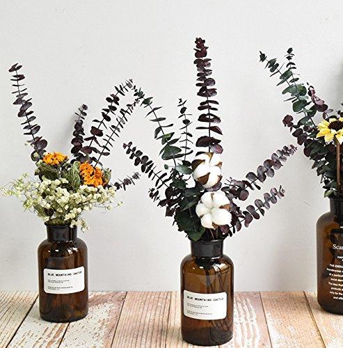 Konservierte Eukalyptus Zweige - 7