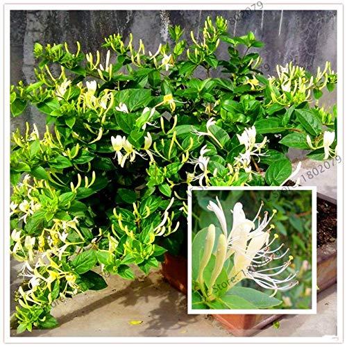 103pcs Honeysuckle Flores Lonicera Japonica Flower Bonsai Tree plantas Fragrant Plant Air Purify Home Garden