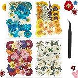 Elscop - 149 fiori pressati naturali secchi misti di foglie secche miste, fiori secchi misti, per arte e artigianato, resina, album di ritagli, biglietti