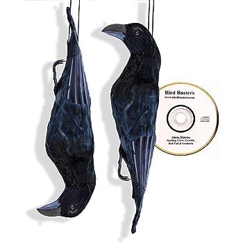 BirdBusters Dead Crow Scare Kit - 2 Dead Crow Bird Deterrents & Bird Distress Calls cd
