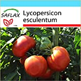 SAFLAX - Set regalo - Tomate - Rosa de Berne - 10 semillas - Lycopersicon esculentum
