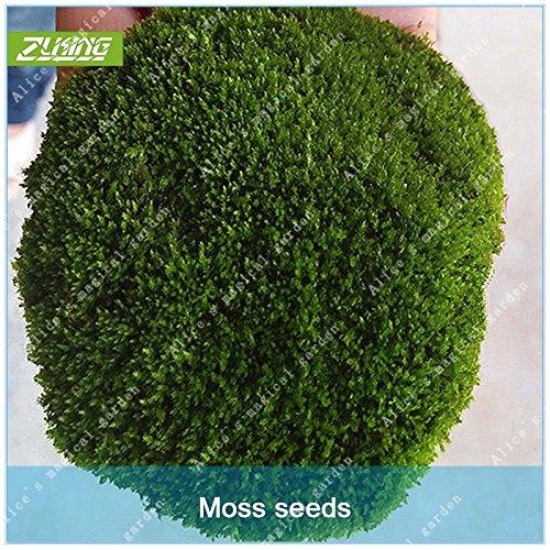 ZLKING 300 Pcs vert irlandais Moss Bonsai Graines Easy Grow Haute Germination Graines taux pour le bricolage jardin Décoration