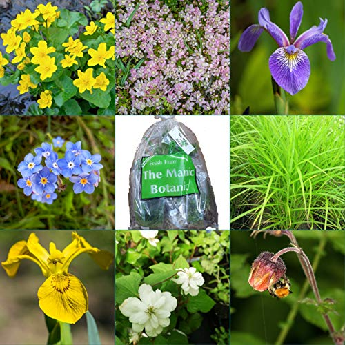 The Manic Botanic Pond Plant Mix of 8 Varieties - Perfect for Small Garden