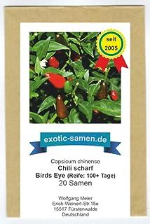 Wahrscheinlich die Urform aller Chilis - extrem scharf - Birds Eye Chili - 20 Samen