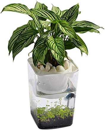 Bloomma Water Garden, Betta Fish Tank Que cultiva Plantas, Mini ecosistema acuapónico | Fish